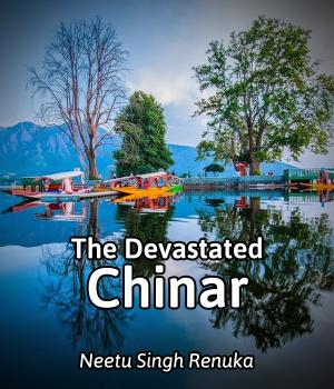 The Devastated Chinar